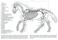 Ravishing Animal Anatomy Coloring Book Colouring Photos Of Snazzy ..